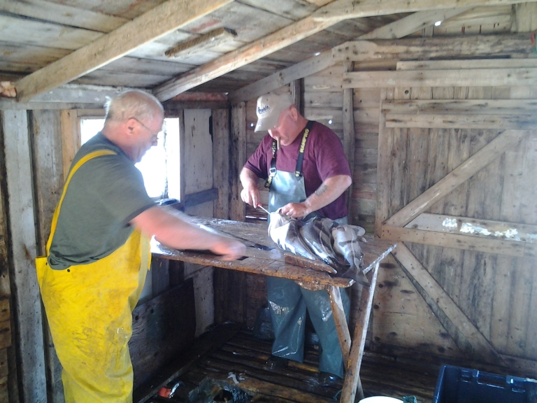 Cyril cutting out cod tongues for Mother. 2013